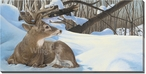 Next Door Neighbors Whitetail Deer Wrapped Canvas Giclee Print