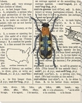 Outrageous Bug Wrapped Canvas Giclee Print Wall Art