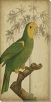 Parrot Bird & Palm IV Wrapped Canvas Giclee Print Wall Art