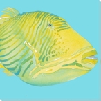 Parrot Fish 2 Wrapped Canvas Giclee Print Wall Art