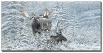 Patient Suitor Moose Wrapped Canvas Giclee Print Wall Art