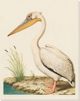 Pelican Bird on the Shore Wrapped Canvas Giclee Print Wall Art