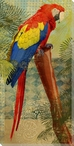 Perching Parrot Bird Wrapped Canvas Giclee Print Wall Art