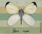 Pieris Rapae Butterfly Wrapped Canvas Giclee Print Wall Art