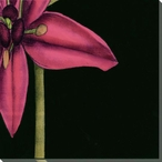 Pink Graphic Lily Flower BR Wrapped Canvas Giclee Print Wall Art