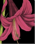 Pink Graphic Lily Flower III Wrapped Canvas Giclee Print Wall Art