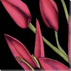 Pink Graphic Lily Flower ML Wrapped Canvas Giclee Print Wall Art