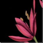 Pink Graphic Lily Flower TL Wrapped Canvas Giclee Print Wall Art