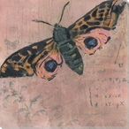 Pink Moth Wrapped Canvas Giclee Print Wall Art