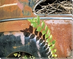 Plants Looking Down on Car Wrapped Canvas Giclee Print Wall Art
