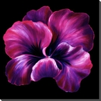 Purple Pansy Flower Wrapped Canvas Giclee Print Wall Art