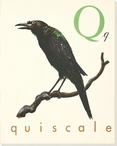 Q. Quiscale Wrapped Canvas Giclee Print Wall Art