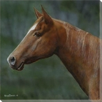 Quarter Horse Head Wrapped Canvas Giclee Print Wall Art