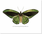 Rainforest Butterfly I Wrapped Canvas Giclee Print Wall Art