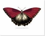 Rainforest Butterfly II Wrapped Canvas Giclee Print Wall Art