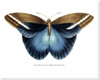 Rainforest Butterfly III Wrapped Canvas Giclee Print Wall Art