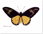 Rainforest Butterfly IV Wrapped Canvas Giclee Print Wall Art