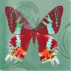 Red and Multicolor Butterfly Study Wrapped Canvas Giclee Print