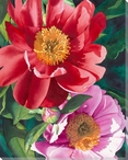 Red and Pink Peony Flowers Wrapped Canvas Giclee Print Wall Art