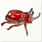 Red Stag Beetle Bug Wrapped Canvas Giclee Print Wall Art