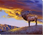 Reveille Elk in the Wild Wrapped Canvas Giclee Print Wall Art