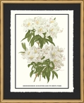 Rhododendron Augustinii Flowers Matted & Framed Art Print Wall Art