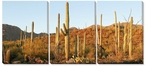 Saguaro Cactus Evening Light Wrapped Canvas Giclee Print, Set of 3