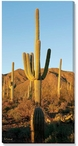 Saguaro Cactus Photographic Print Wrapped Canvas Giclee Print