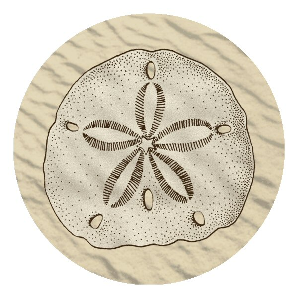 Sand dollar absorbent beverage coasters set of 12 drink coasters thirstystone - Drink coasters absorbent ...