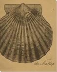 Scallop Etching Wrapped Canvas Giclee Print Wall Art