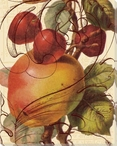 Scrolled Apple and Cherries Wrapped Canvas Giclee Print Wall Art