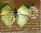 Scrolled Butterfly 2 Wrapped Canvas Giclee Print Wall Art