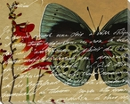 Scrolled Butterfly 3 Wrapped Canvas Giclee Print Wall Art