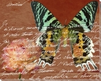 Scrolled Butterfly 5 Wrapped Canvas Giclee Print Wall Art
