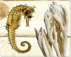 Seahorses Wrapped Canvas Giclee Print Wall Art