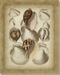 Seashell Collection II Wrapped Canvas Giclee Print Wall Art