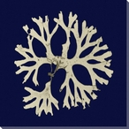 Seaweed on Navy I Wrapped Canvas Giclee Print Wall Art