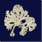 Seaweed on Navy IV Wrapped Canvas Giclee Print Wall Art