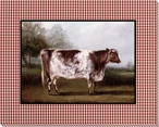 Short Horn Cow in Grounds of Country House 2 Wrapped Canvas Print