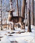 Simply Curious Deer I Wrapped Canvas Giclee Print Wall Art