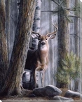 Simply Curious Deer II Wrapped Canvas Giclee Print Wall Art