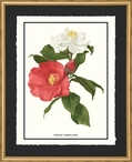 Single Camellias Flowers Matted and Framed Art Print Wall Art