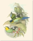 Small Birds of the Tropics I Wrapped Canvas Giclee Print Wall Art