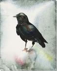 Small Black Crow Bird Wrapped Canvas Giclee Print Wall Art