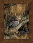 Small Green-Winged Teal Ducks Framed Canvas Art Print Wall Art
