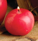 Small Honey Crisp Candles, Set of 6
