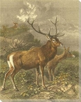 Small Red Deer Wrapped Canvas Giclee Print Wall Art