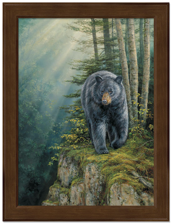Small Rocky Outcrop Black Bear Framed Canvas Art Print Wall Art ...