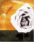 Soft Pink Rose in Sunshine Wrapped Canvas Giclee Print Wall Art