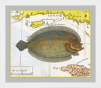 Sole Fish Matted and Framed Art Print Wall Art